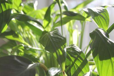 1.sunshine on plant