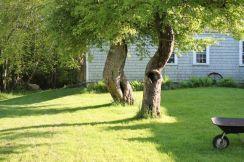 4.backyard bliss