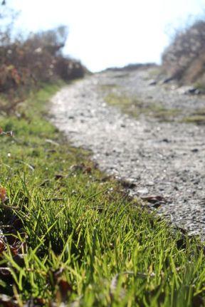 7.green grass on path
