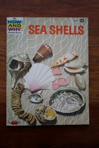 sea shell book
