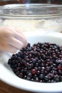 blueberry thief
