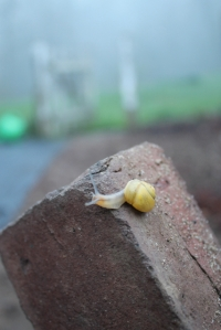 snail on brick