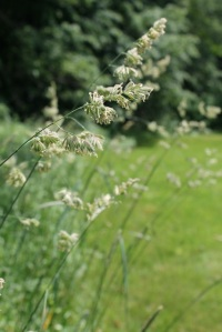 bending grass