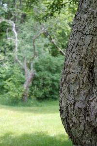 bump in tree