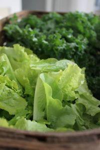 freshly picked lettuce and kale