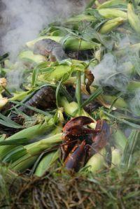 lobsters, corn + seaweed