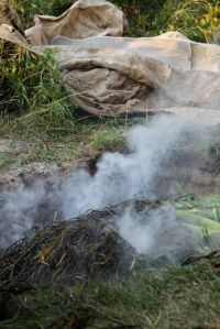 seaweed + steam