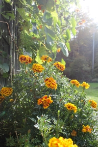 marigolds filled in