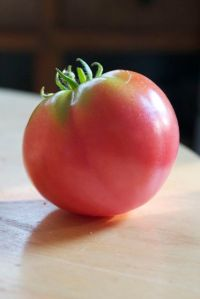 first ripe tomato