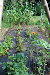 garden mid summer