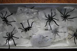 spider ice